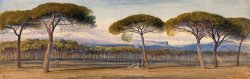 A View of The Pine Woods Above Cannes by Edward Lear