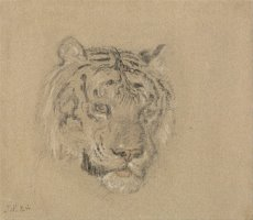 Head of a Tiger by James Ward