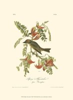 Pipiry Flycatcher by John James Audubon