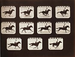 Sallie Gardner Running From The Attitudes of Animals in Motion by Eadweard J. Muybridge