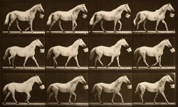 Walking with a Bucket in Mouth; Light Gray Horse, Eagle by Eadweard J. Muybridge