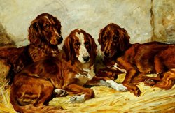 Three Irish Red Setters by John Emms